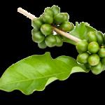 Caffè verde, come perdere peso.