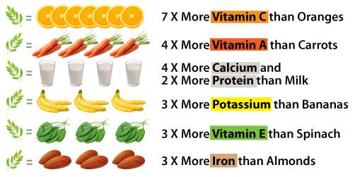 moringa-vitamine