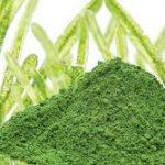 Clorella: l'alga del benessere