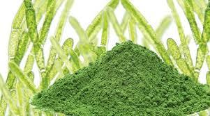 clorella-alga